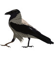 walking black crow vector image