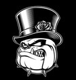 bulldog with hat vector image
