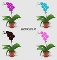 four realistic multicolored orchids in pots vector image vector image