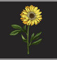 hand drawn yellow daisy flower with stem vector image vector image