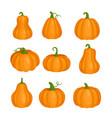 pumpkin set for halloween party orange cute vector image