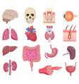 internal human anatomy organ icon set vector image