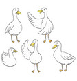 funny ducks hand drawn vector image