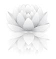 Grey lotus vector image vector image