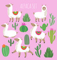 mexican white alpaca lamas and desert plants vector image