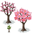 Stages of growth and flowering cherries tree vector image