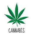 Cannabis leaf Marijuana herb Drug plant vector image
