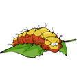 caterpillar eating leaf vector image