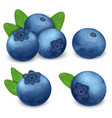 bilberry icon set realistic style vector image