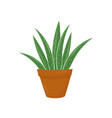 brown flowerpot with aloe vera green medical vector image vector image