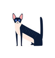 cartoon black and white cornish rex cat breed vector image
