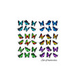 mega set colorful beautiful bitterflies vector image