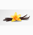 realistic vanilla flower and pods isolated vector image vector image