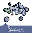 blueberries in hand-drawn graphics vector image