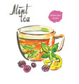 mint tea watercolor vector image vector image