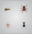 set of insect realistic symbols with grasshopper vector image