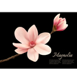 Branch with two pink magnolia flowers vector image vector image