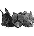 design heads dogs pitbull dobermann bulldog vector image