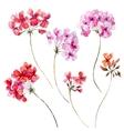 Watercolor geranium floral set vector image