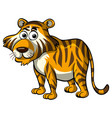 wild tiger on white background vector image