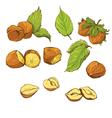 nuts handdrawn color 380 vector image