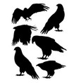 eagles birds animal silhouette vector image