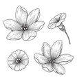 hand drawn monochrome lily and bindweed flowers vector image vector image