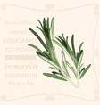 sprig of in vintage style vector image