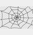cobweb isolated on white vector image