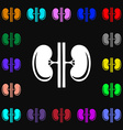 Kidneys icon sign Lots of colorful symbols for vector image