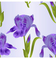 seamless texture flower violet iris with leaves vector image