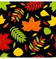 autumn leaves on the black vector image vector image