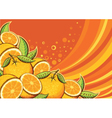 Orange fruits background vector image vector image