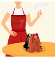 Professional dog grooming for Yorkshire Terrier vector image vector image