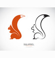 squirrel design on white background mammal vector image vector image