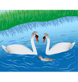 swans on lake vector image vector image