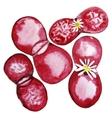 Watercolor cute succulent vector image