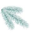 lightgreen fir tree branch vector image vector image
