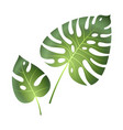 monstera tropical leaves jungle palm plants vector image