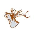 Stag Deer Roaring vector image vector image