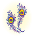 Peacock feather vector image vector image