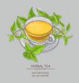 nettle tea vector image