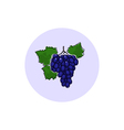 Icon Colorful Grapes vector image vector image