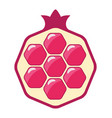 pomegranate cut icon vector image vector image