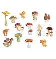 Collection of cartoon mushrooms and fungus vector image