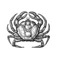 crab with claws sketch in vintage vector image