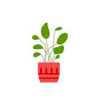 house plant with leaves in decorative pot icon vector image