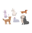 set funny big and small dogs breeds vector image vector image
