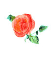 red rose bud and green leaves vector image vector image