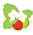 ripe strawberries vector image vector image